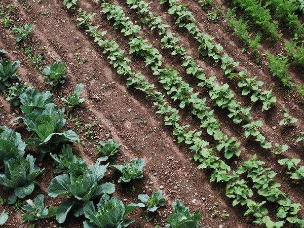 nostro orto dalla terra alla tavola