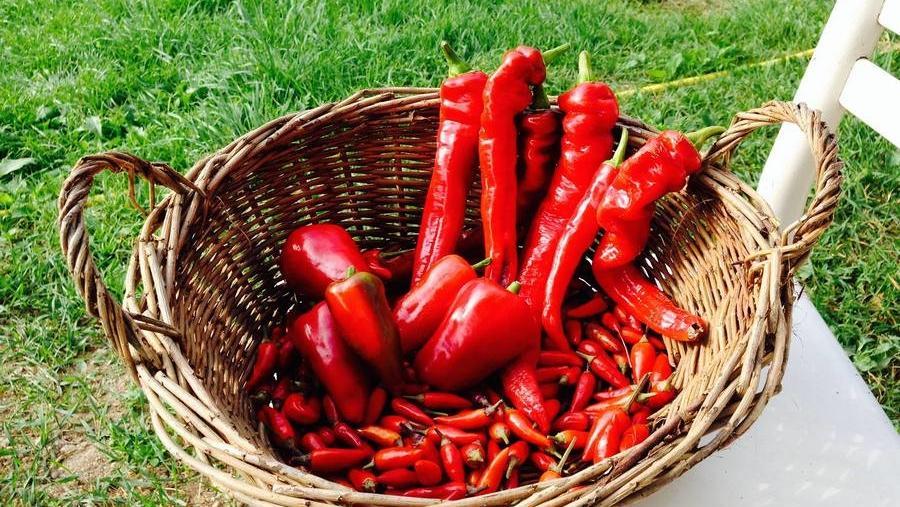 In cucina con Franca: peperoncino trentino - FI