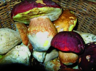 Funghi sicuri - I1
