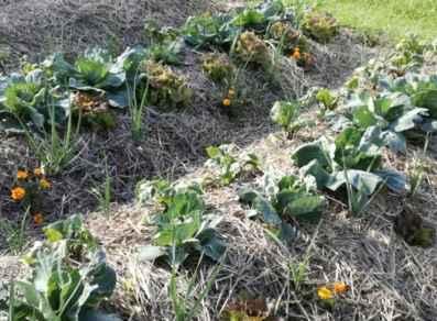 L'orto a cumulo: una soluzione ideale per piccoli spazi - EH5