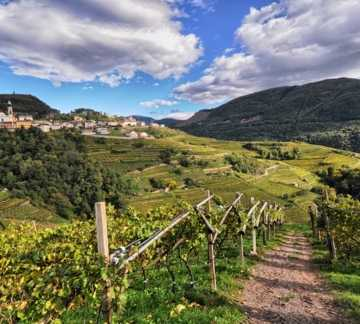 http://www.visitpinecembra.it/var/pinecembra/storage/images/_aliases/theme_holiday_small_image/3/8/1/5/315183-1-ita-IT/Vendemmia di Pinot - PH L Lona (12).jpg - RP4