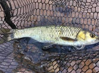 Pesca al lago delle Piazze - G5