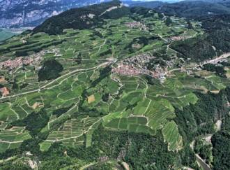 Terraced vineyards - G1