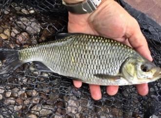 Pesca al lago delle Piazze - G2