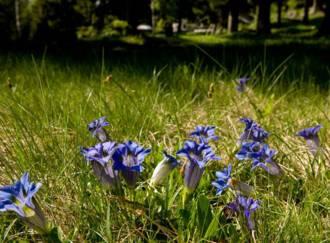 Naturreservat Alta Val di Cembra-Avisio - G2