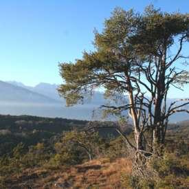 Rete di Riserve Alta Val di Cembra-Avisio - FI