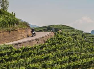 Terraced vineyards - G4